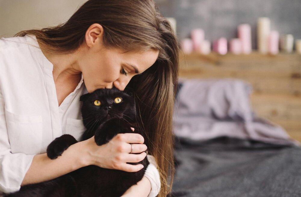 Kodeerime kodukassi erinevad häälitused: mida sinu kass sulle alalõpmata öelda püüab?