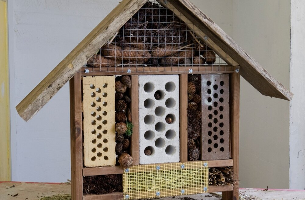 Kui leiate putukamajale aias hea koha, võib putukamaja juba mõne aastaga asustada mitmekesine asurkond kiletiivalisi putukaid.