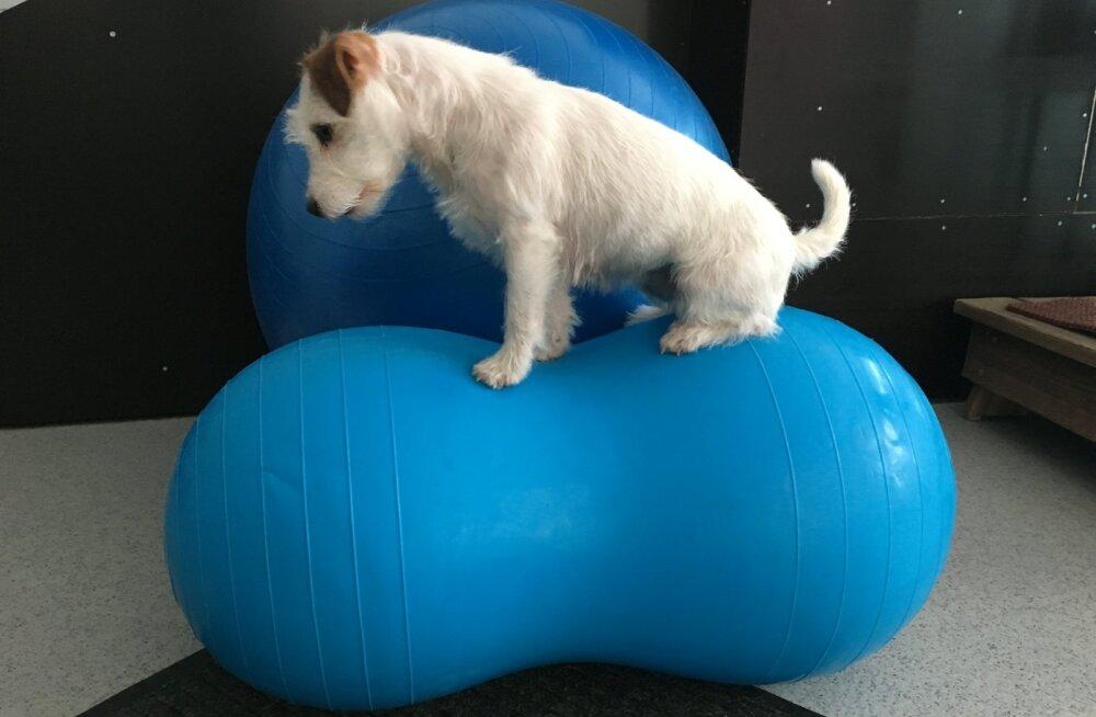 Igapäevased lihtsad kodused harjutused aitavad tagada koera hea füüsise ja tervise.