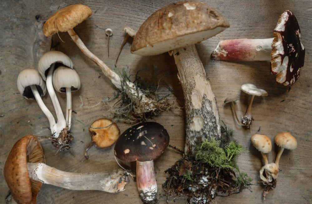 Ah sõida õige seenele! Seened meie elus ja tehnikas