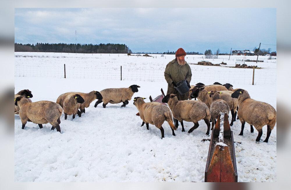 Eesti lihaloomade turu määravad usupühad