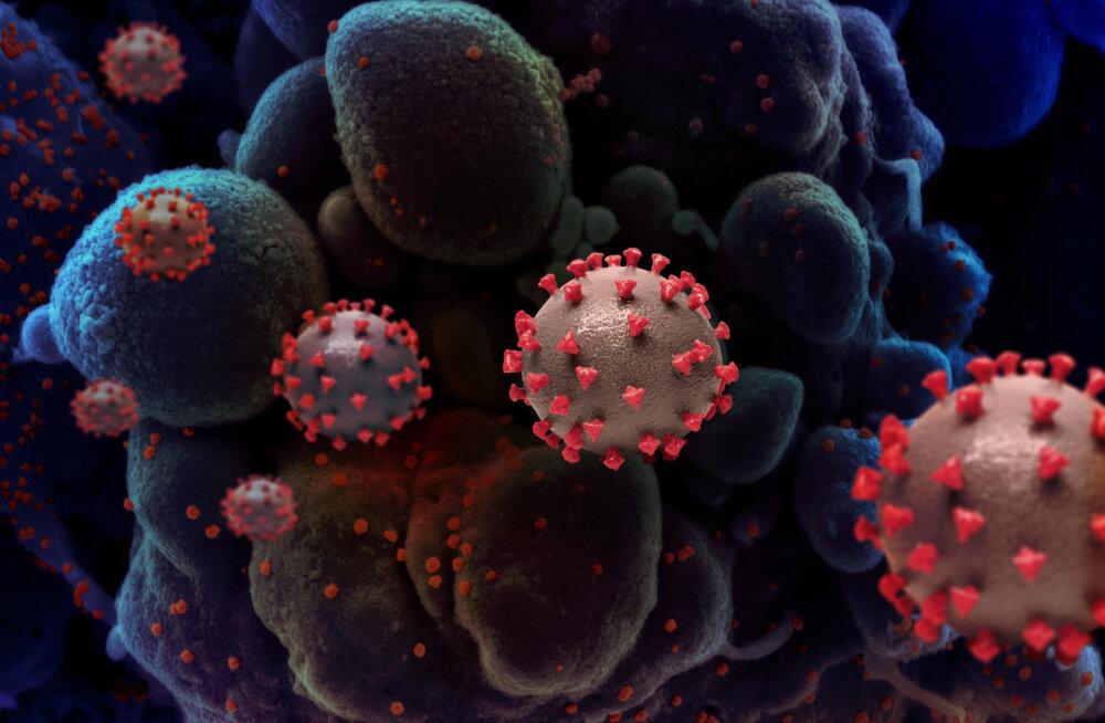 """Teadlased paljastasid koroonaviiruse saladuse – ta erineb kõigist teistest """"ametivendadest"""""""