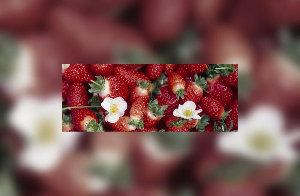 Šokolaadifondüü maasika- ja puuviljavarrastega