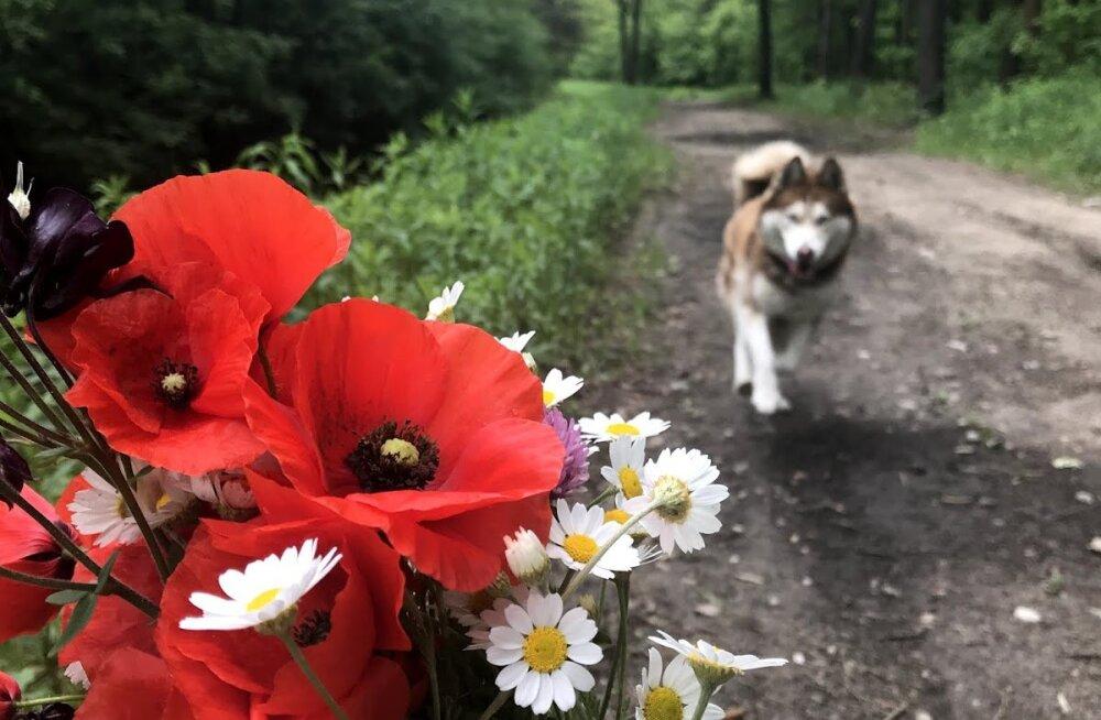 FOTO | Eesti tudeng leidis Poola metsast kadunud koera