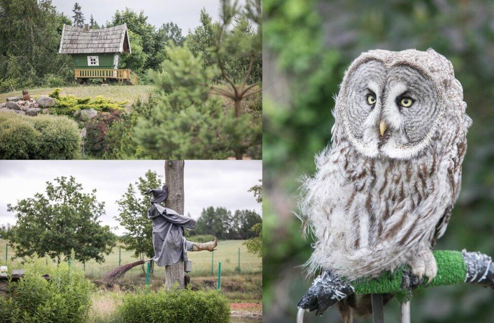 ФОТО | Необычный парк в Литве, где туристов ждет мощный заряд положительных эмоций