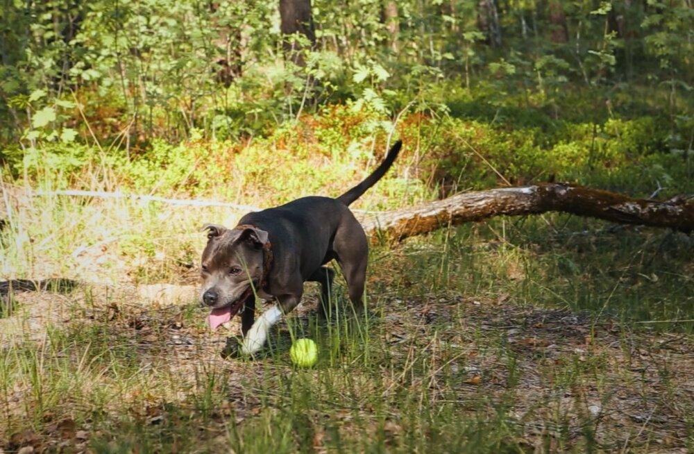 VIDEOÕPETUS ja LOOS | Mine oma koeraga seiklema! Kus ja kuidas seda teha?