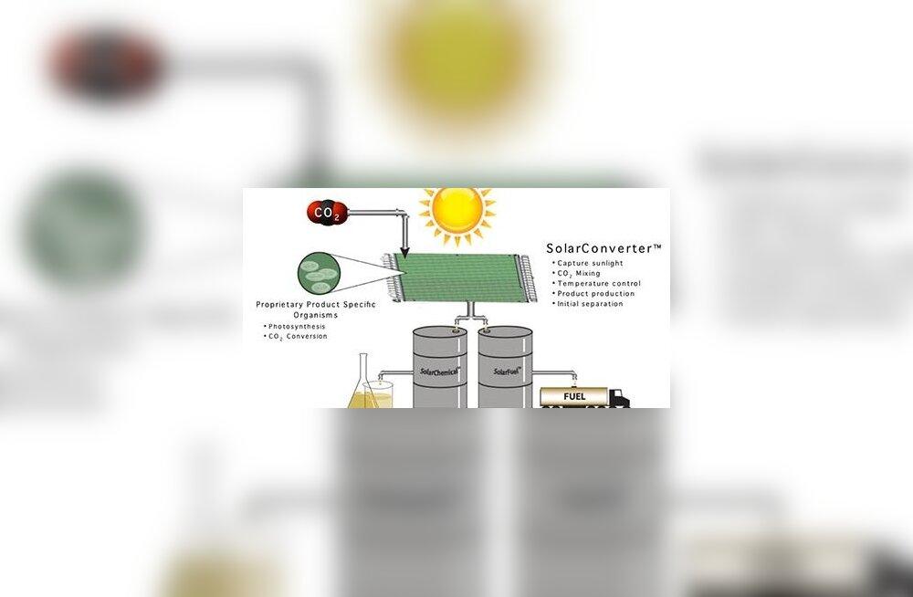 Uudset biokütust tehakse veest ja päikesevalgusest