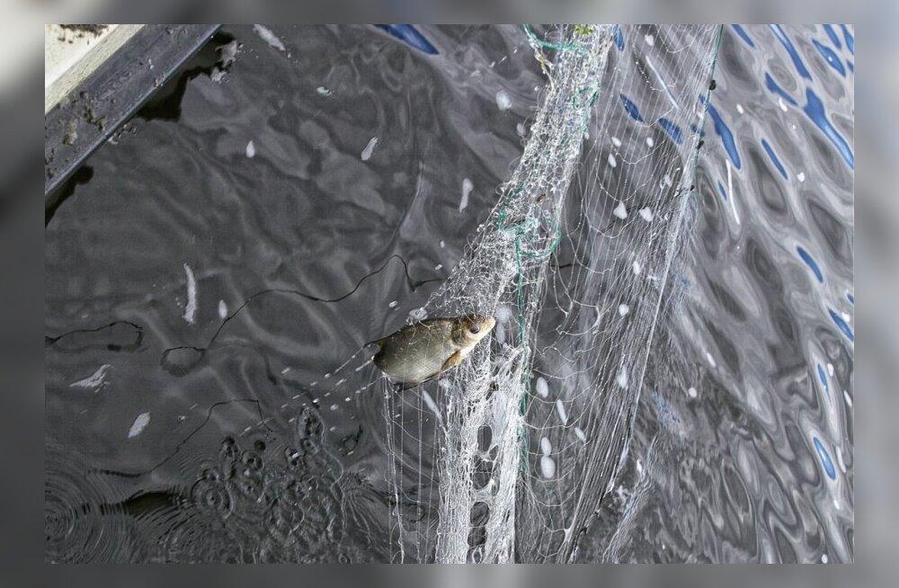 Sügisese püügihooaja algus Peipsi, Lämmi- ja Pihkva järvel lükkub edasi