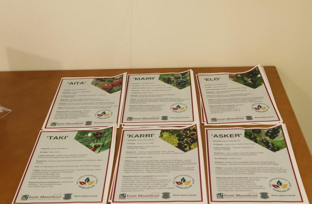 Järgmise kümnendi sordiaretusprogramm: eesmärgiks vajaduspõhisus ja toidulaua mitmekesisus