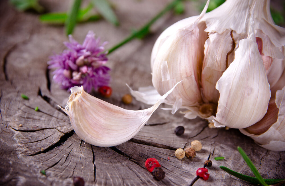 Küüslauk - looduslik antibiootikum ja võimas immuunsüsteemi tugevdaja
