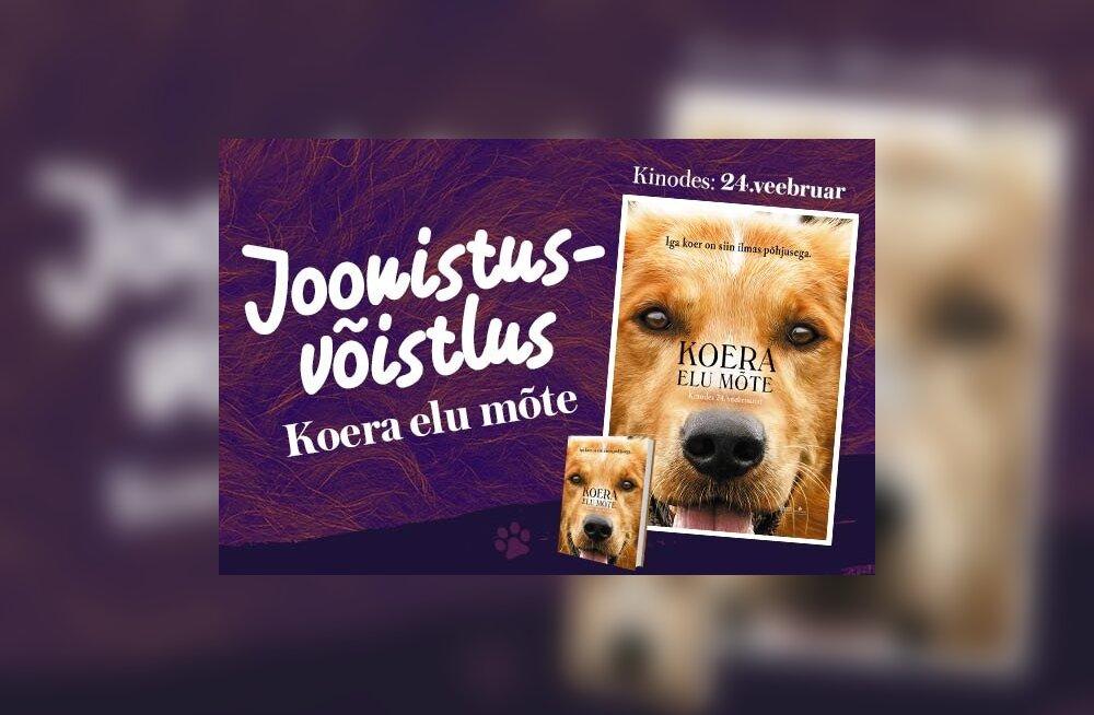 """JOONISTUSVÕISTLUS """"Koera elu mõte"""": Hääleta oma lemmikpildi poolt ja tule 22. veebruaril filmi esilinastusele!"""