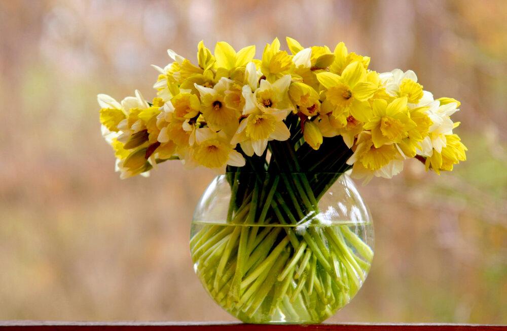 Teejuht naistepäevaks: millist sõnumit erinevad lilleõied ja nende arv kannavad?
