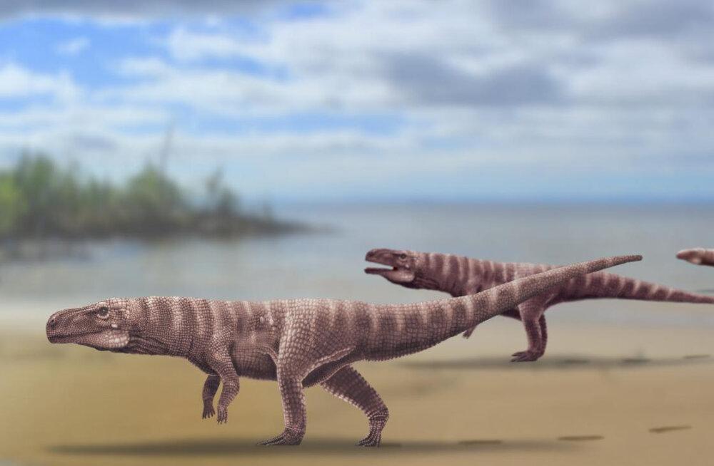 Krokodillide eellased käisid kahel jalal