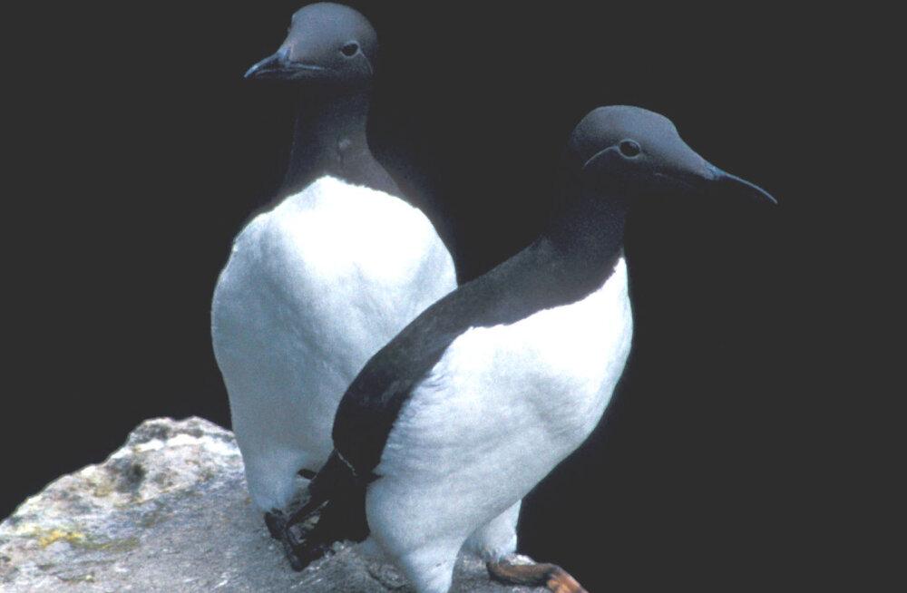 Miks osad linnumunad evolutsiooni käigus pirnja kuju said?