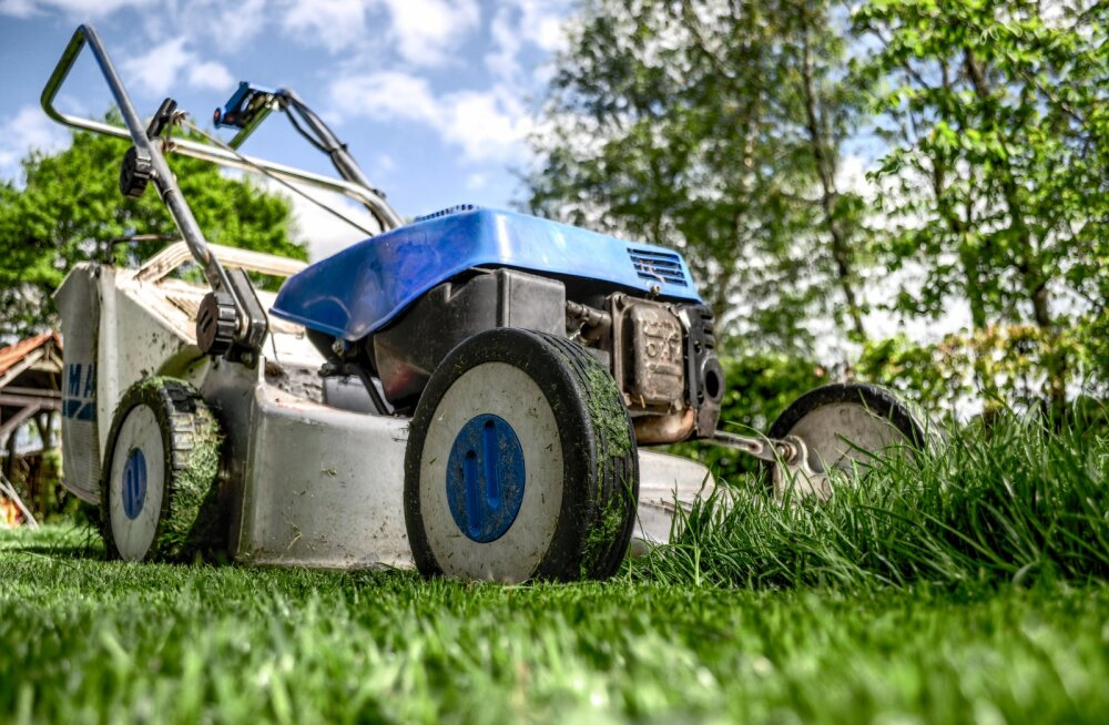 Vajalik teadmine igale aiapidajale! Mida hakata peale niidetud muruga?