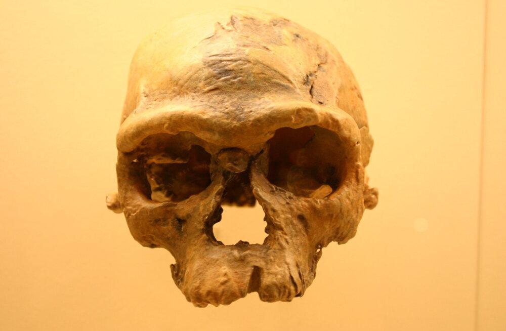 Professor uutest fossiilidest: seekord tuleb tõesti õpikud ringi kirjutada
