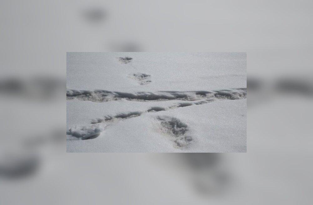 India armee väitis, et leidis lumeinimese jalajäljed