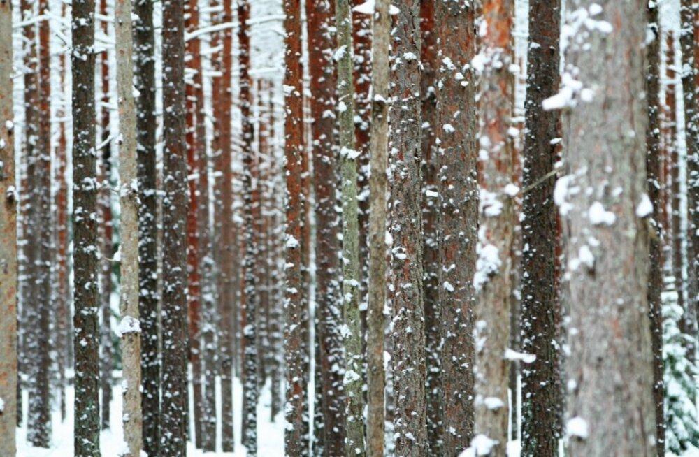Lumine talv põhjarannikul.