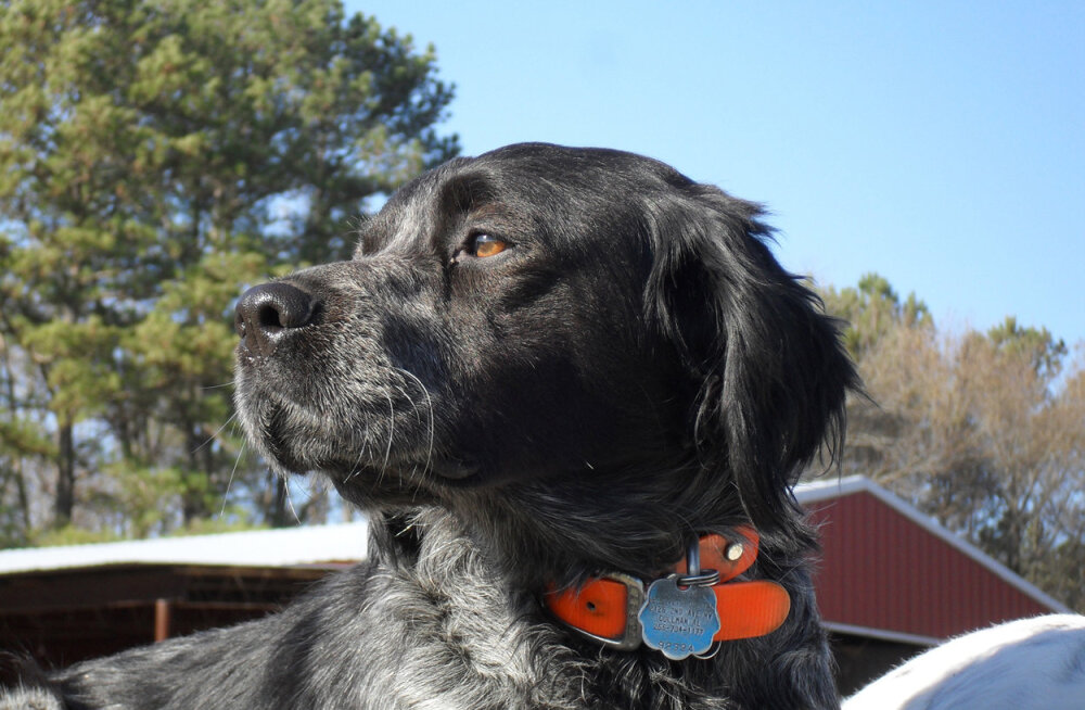 FOTOD: interneti hitt: suukorv, mis muudab sõbraliku koera õudustäratavaks kiskjaks