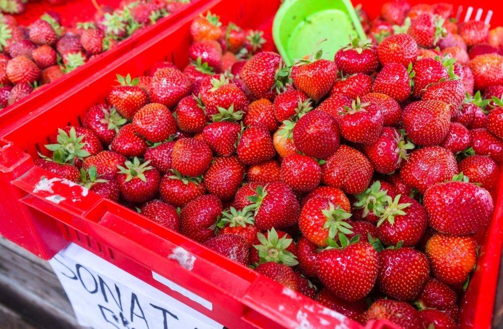 Margus Tsahnka müüb turul maasikaid