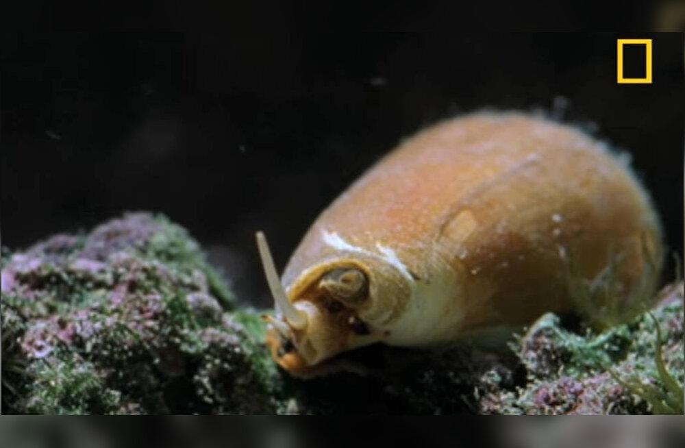Briti perekond avastas oma akvaariumist maailma mürgiseima merelooma