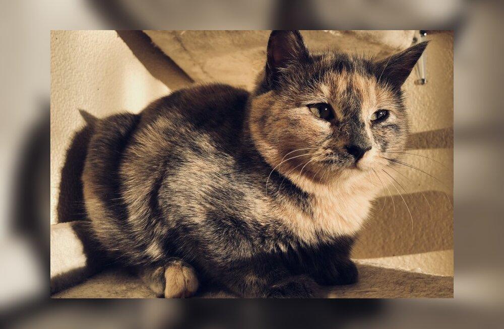 Mur-Muri lugu   kassipoeg istub puuris seni, kuni leidub keegi, kes saab teda aidata