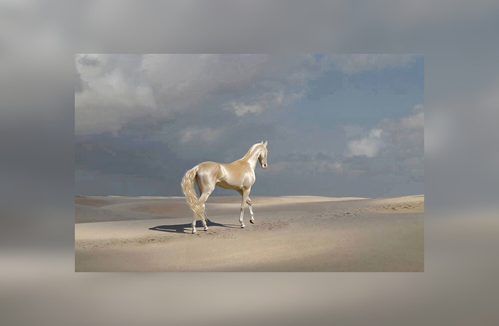 FOTOD JA VIDEO   Kas see ongi maailma kauneim hobune?