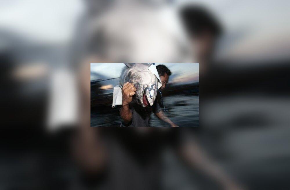 Keskkonna rikkumiste registri eesotsas kalamehed