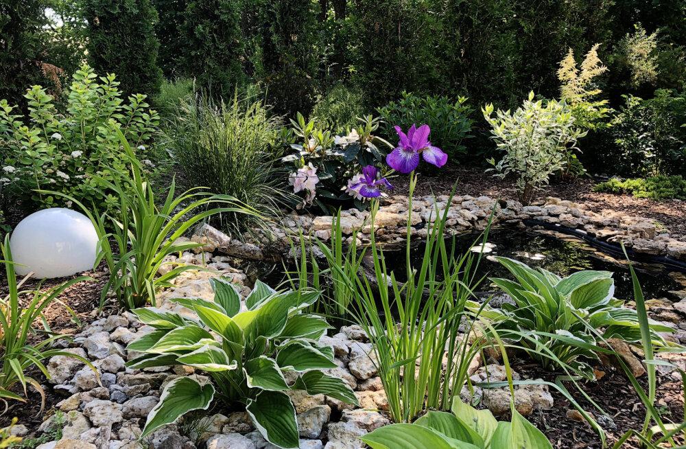 Искусствовед Эвелина Ведом: с садом, как с детьми — надо создать условия и не мешать. Тогда вырастет что-то хорошее