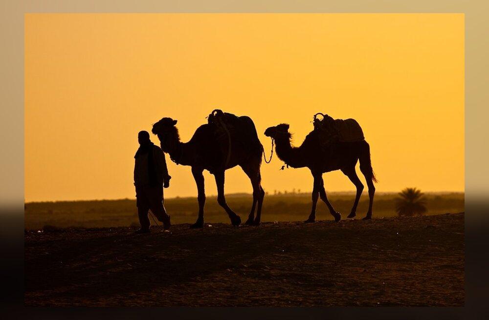Minu Maroko: mitut magamistuba teie pere vajab?