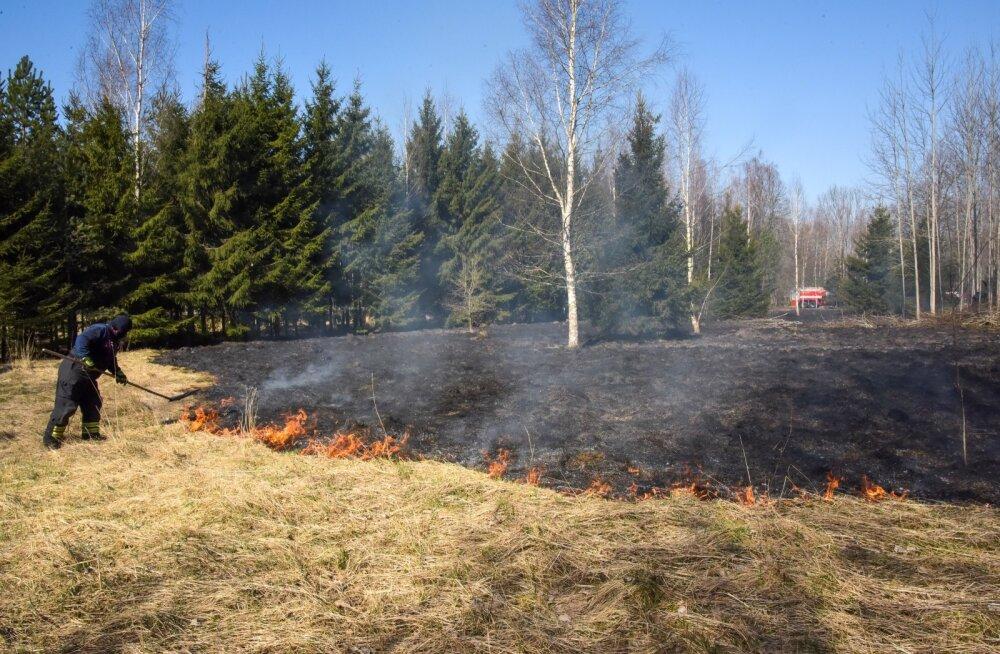 Viljandimaal põles kulu, ohus olid ka majad