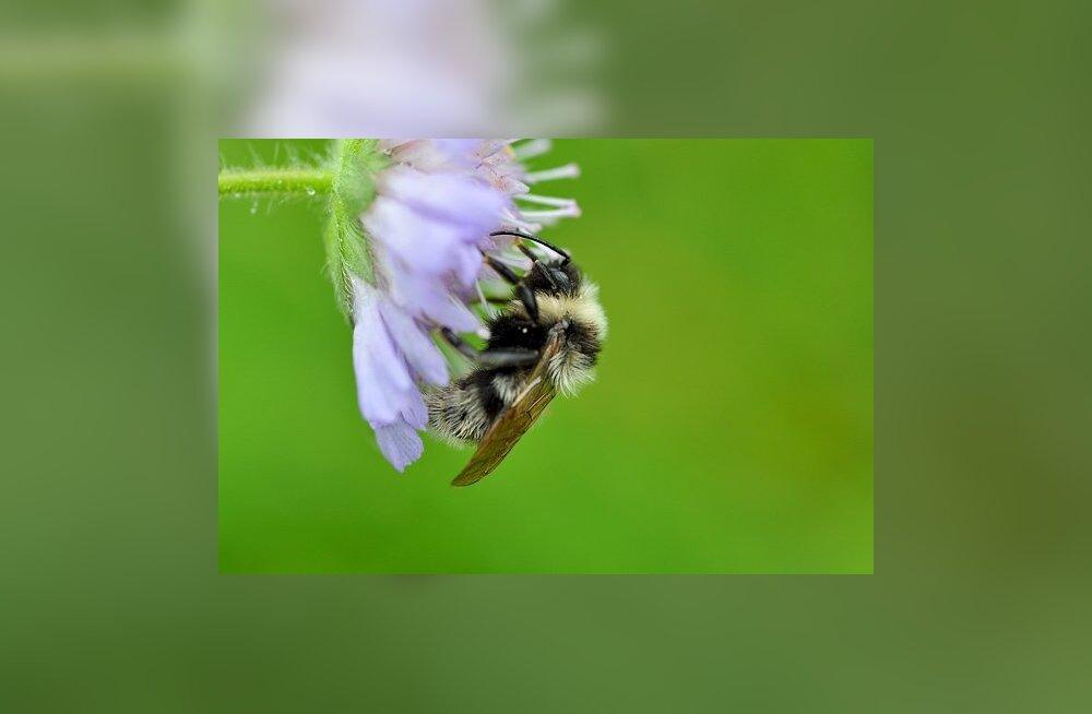 Mesinik: mürgid tapavad mesilinde rohkem kui pakane