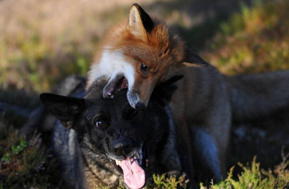 Lummavad FOTOD: Norras elab kaks ülivahvat parimat sõpra
