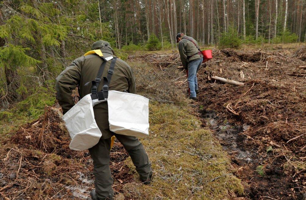 Metsaistutajale käivad taimed selga selliste kottidega, potitaimede istutamiseks saab kasutada spetsiaalset istutustoru. Sel moel jõuab kogenud istutaja päevas maha panna isegi 800 taime.