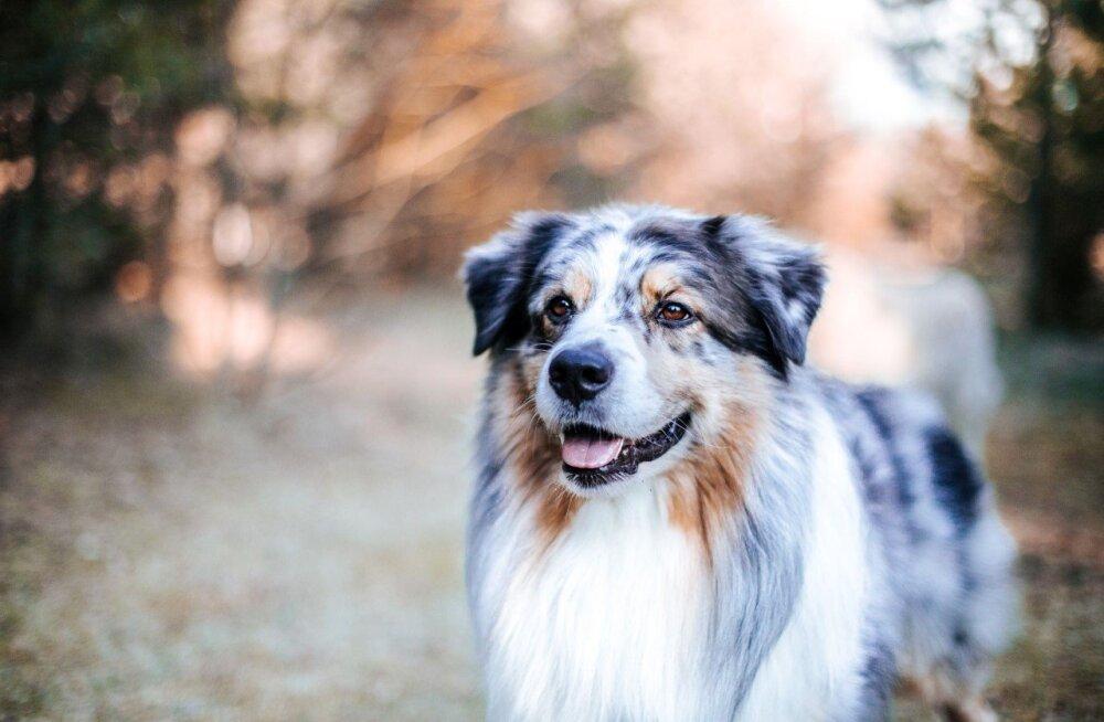 6 üllatavat fakti koerte kohta, mida sa tõenäoliselt varem ei teadnud