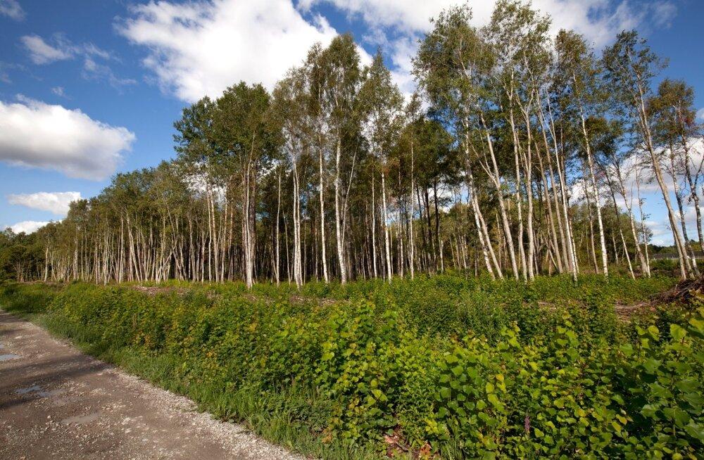 PUIDUENERGIA SEMINAR   MAK 2030 ootab endiselt aktiivse metsarahva ettepanekuid