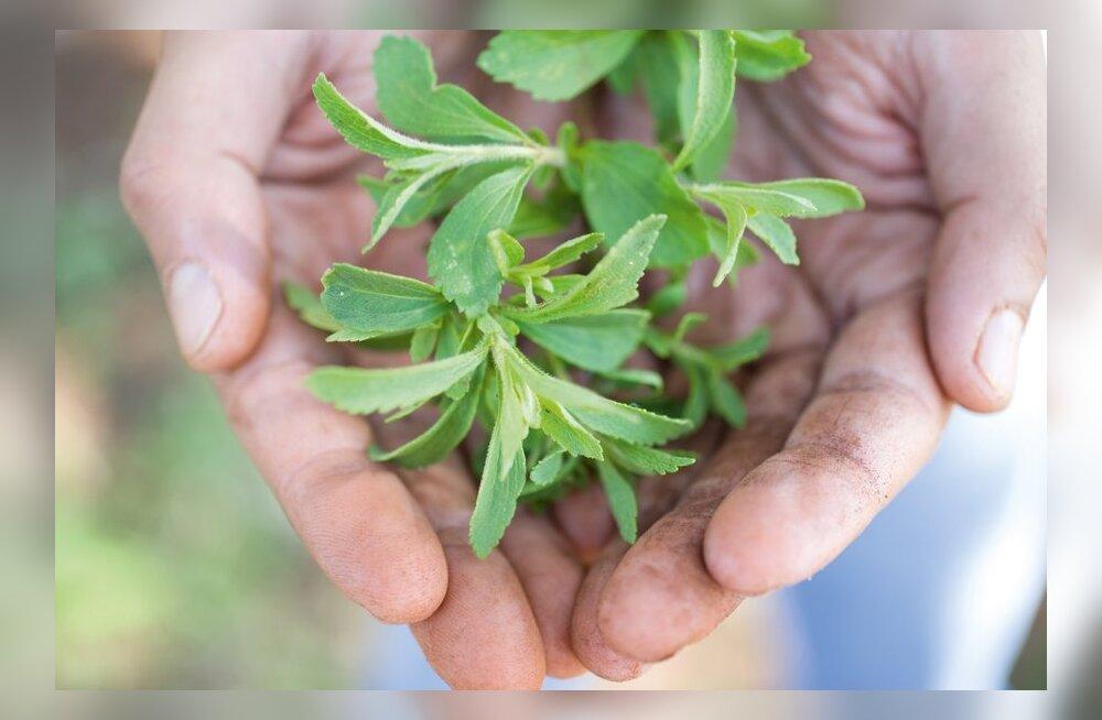10 fakti loodusliku magusaine stevia kohta
