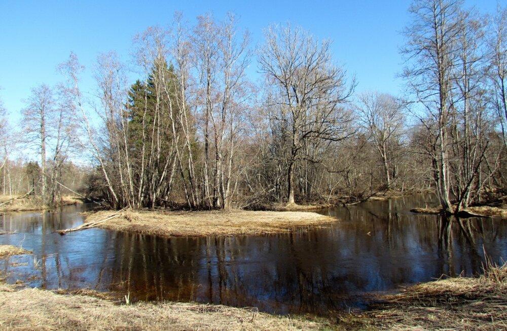 Leili metsalood | Kevadised jõekäärud