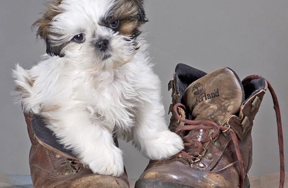 Koera pidamine korteris: seitse nõuannet, et nii su lemmikloom kui ka naabrid õnnelikud oleksid