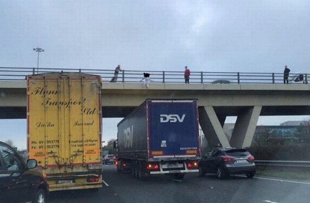 ФОТО | В Ирландии водитель грузовика эстонской фирмы спас девушку. Помогите его найти!