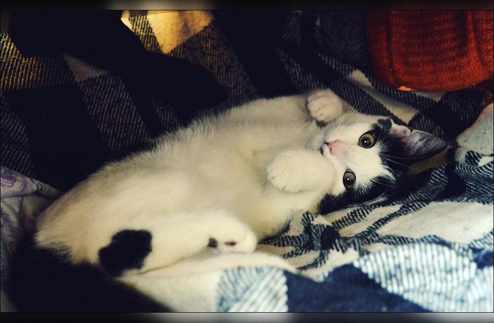 Ühel päeval muutus kõik: kass Sam sattus pere ellu vägagi veidral moel