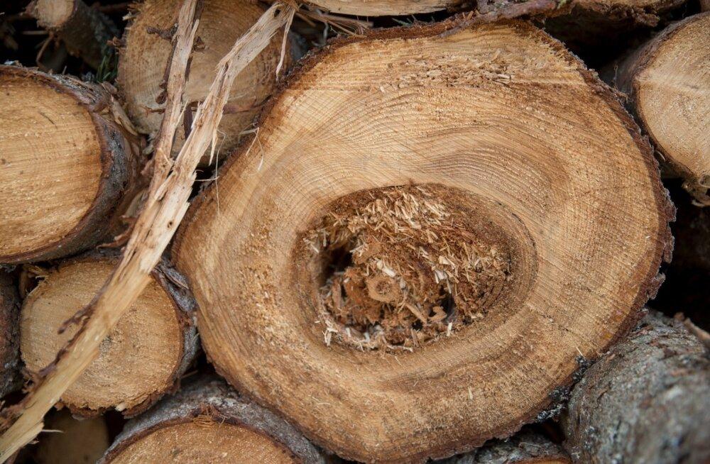 Okaspuu jämesortimendist võib teatavatel tingimustel saada ka paberipuu.