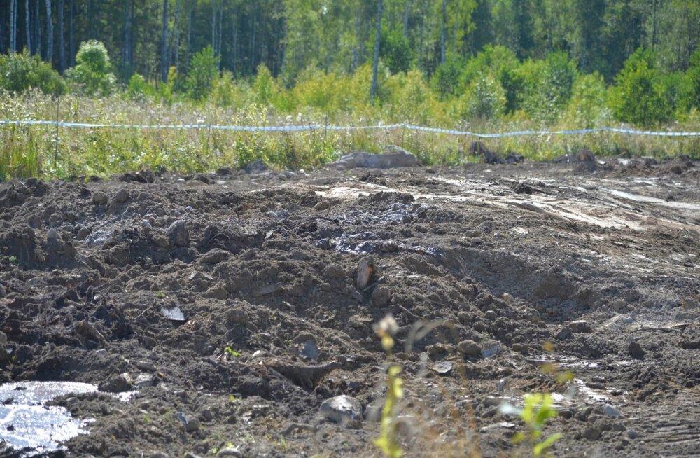 Homme maetakse Viljandimaale üle 3000 sea, kohalikud on hirmul: seakorjused rikuvad põhjavett ja tõusevad maapinnale