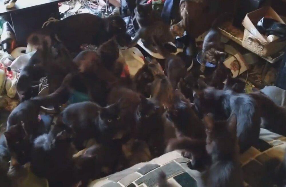 JAHMATAV VIDEO | Vanamemme loomarmastus ületas piirid: pisikesest korterist leiti 30 kassi, kelle elud on ohus