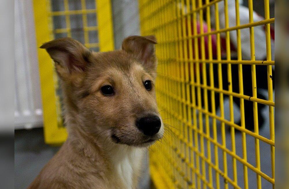 Loomade varjupaik: kas abistamissoov või äri?