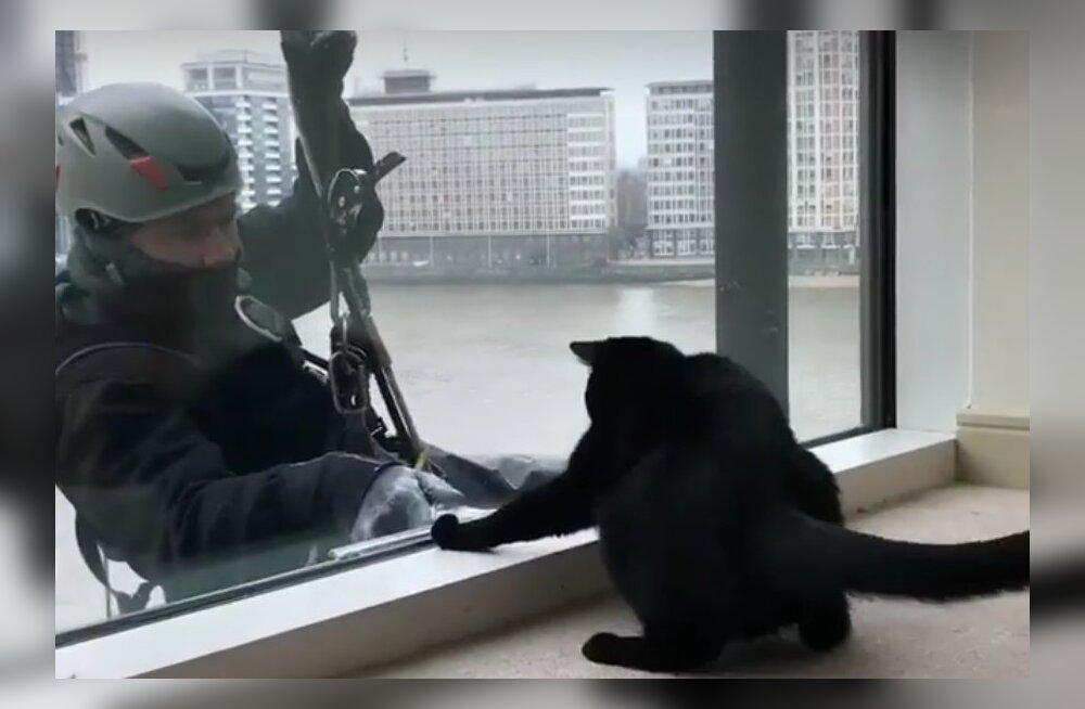 Naljakad VIDEOD | See aknapesija pakub kassidele tõelist meelelahutusprogrammi
