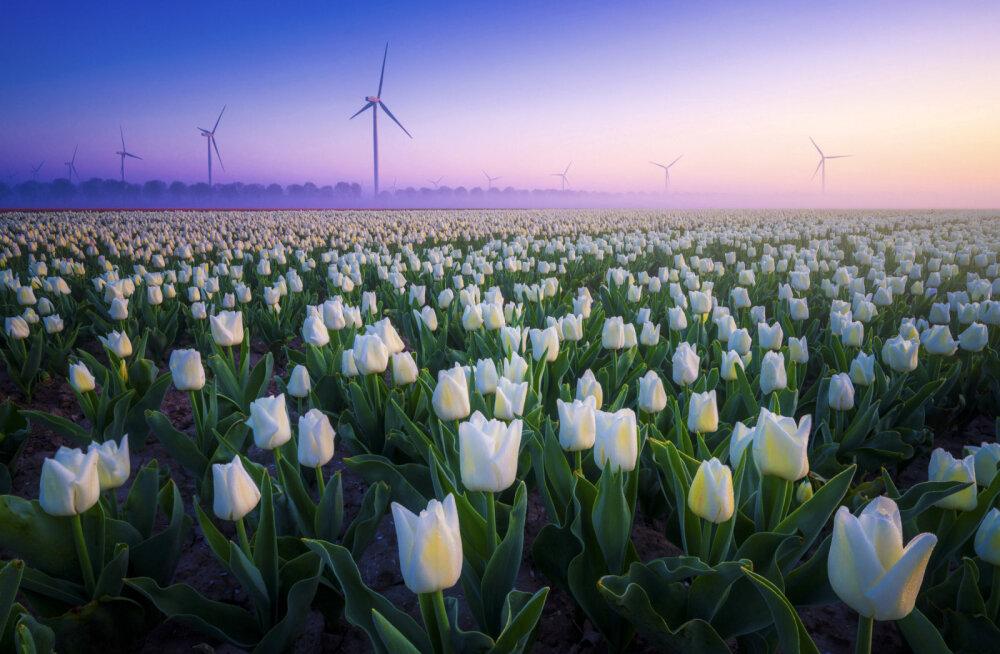 17 мгновений весны. Волшебные фотографии со всего света