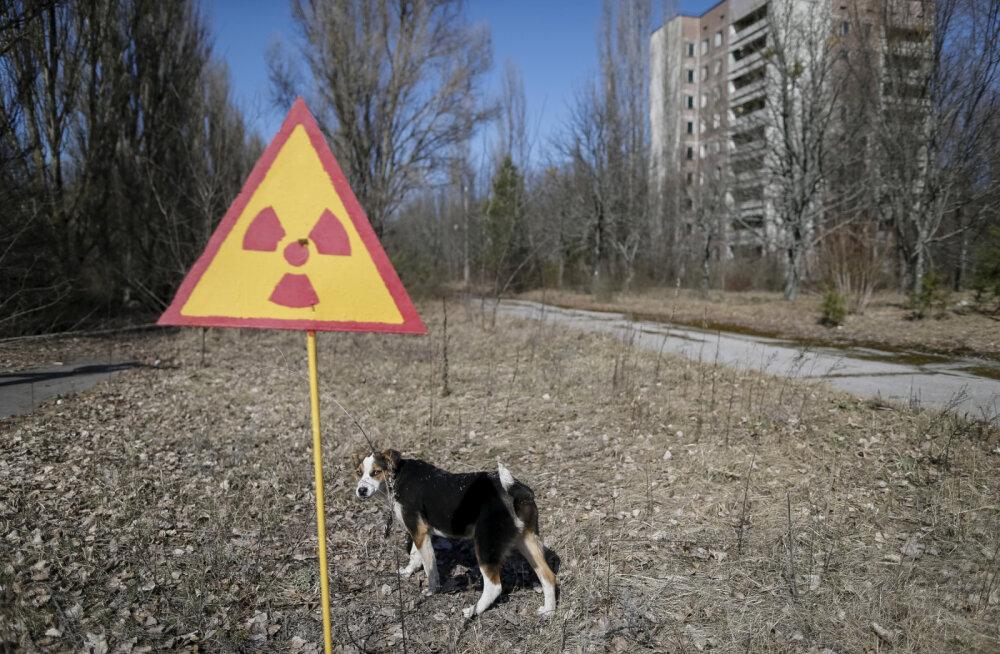 ФОТО   Животные Чернобыля. Как им живется в зоне отчуждения в наши дни