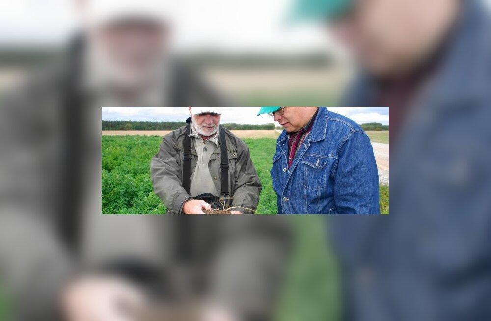 Saarlane Kaido Kirst kasvatas 3,7-tonnise suvirapsi hektarisaagi
