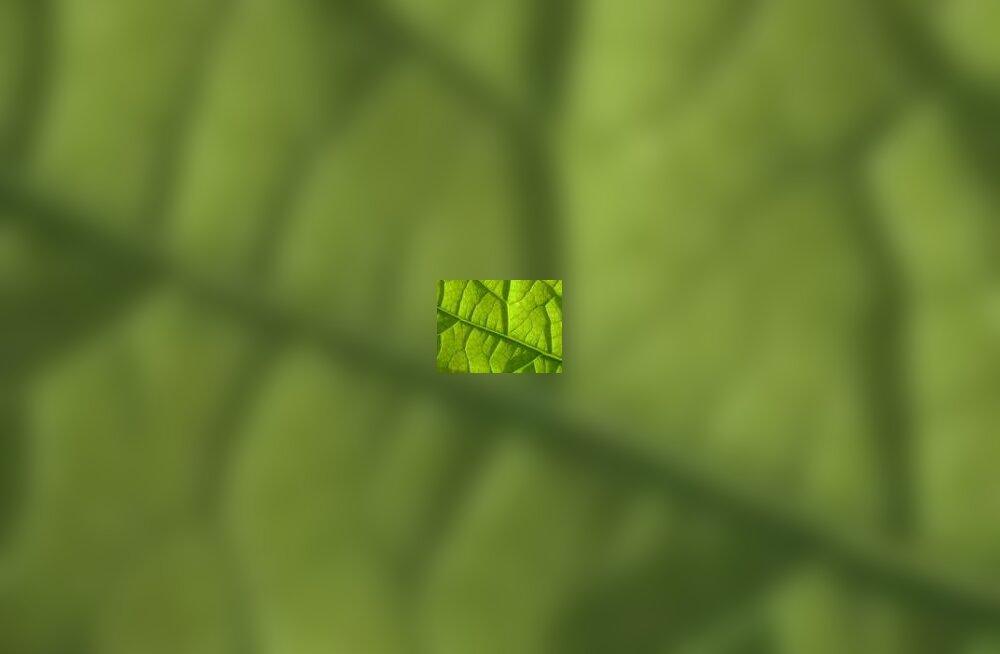 Puuleht